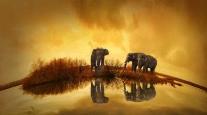 thailand_elephant_sunset_238874b